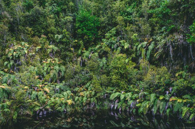 20180103-DSCF6941-NZ-Aotearoa.jpg