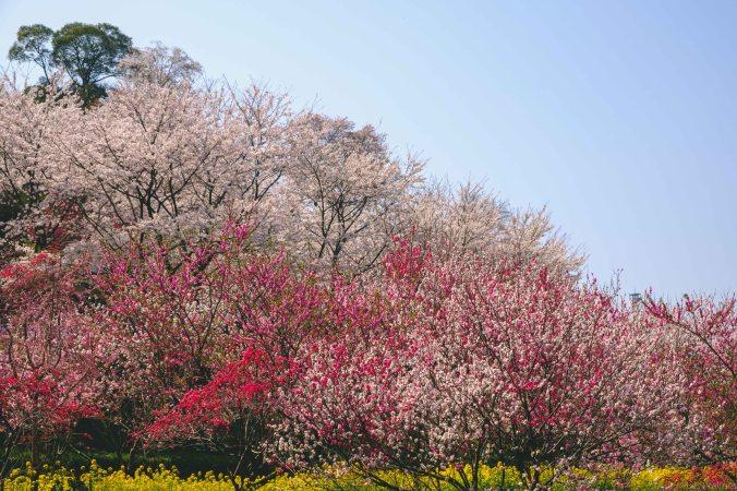 20180325-DSCF9362-Asie-Japon