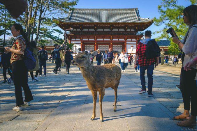 20180328-DSCF9465-Asie-Japon-Honshu